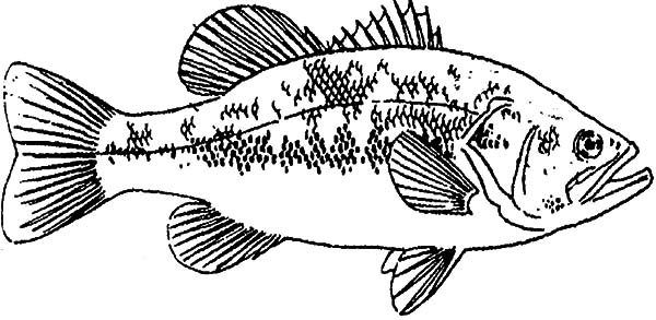 Fishing Target Bass Fish Coloring Pages