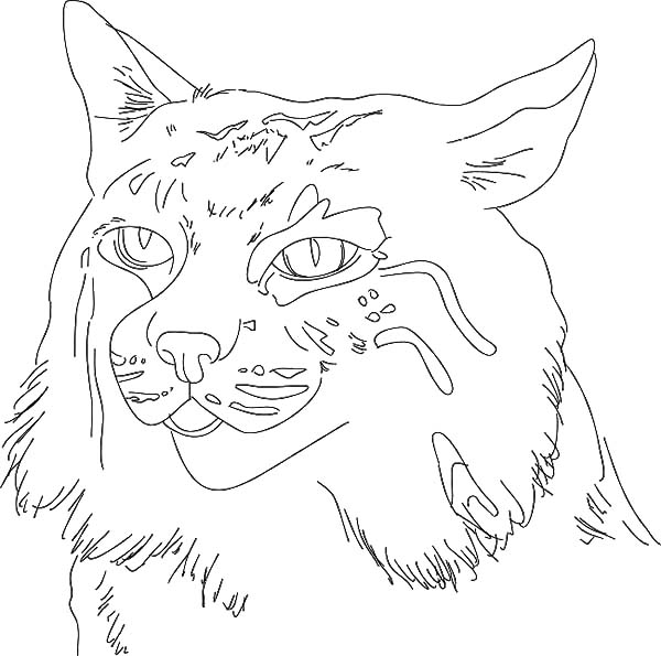 Sketch Of Bobcat Coloring Pages