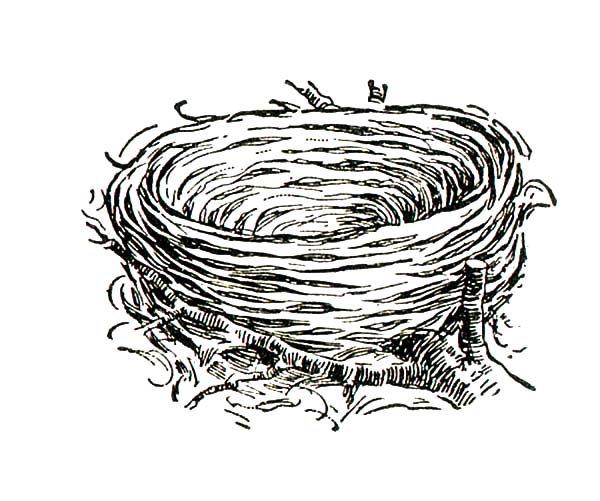 Bird Nest from Dry Grass Coloring Pages: Bird Nest from Dry Grass ...