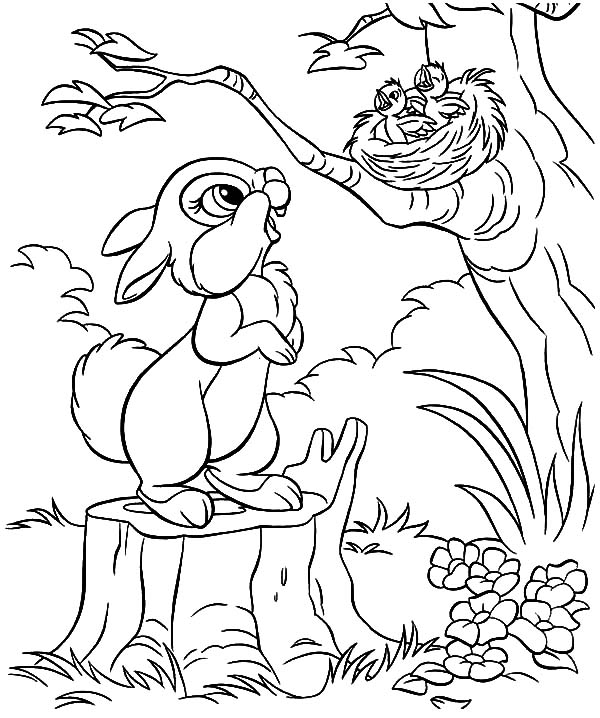 Little Rabbit Saw Bird Nest And Baby Coloring Pages