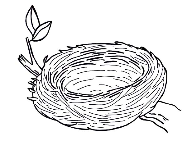 Warm and Safe Bird Nest Coloring Pages: Warm and Safe Bird Nest ...