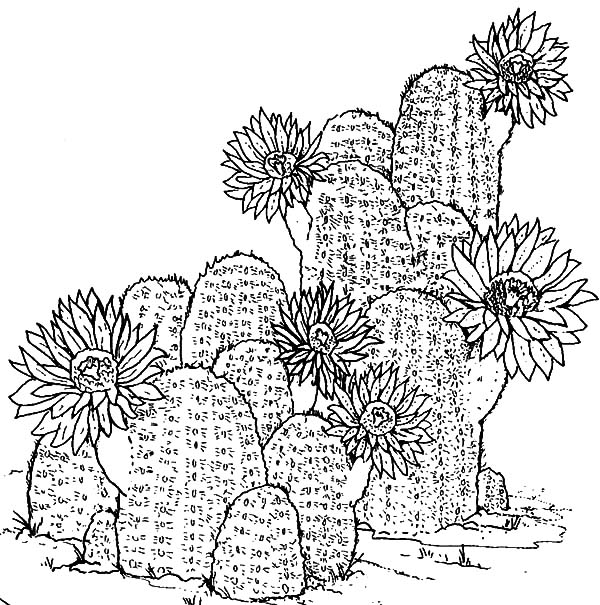 download - Prickly Pear Cactus Coloring Page