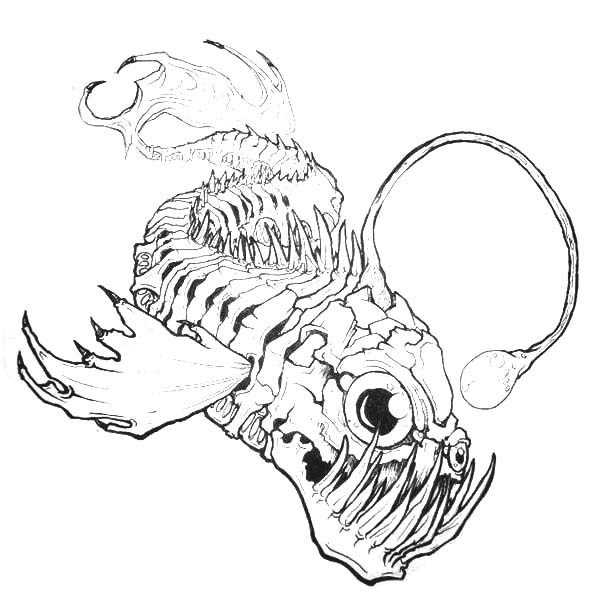 Angler Fish, : Angler Fish Bone Anatomi Coloring Pages