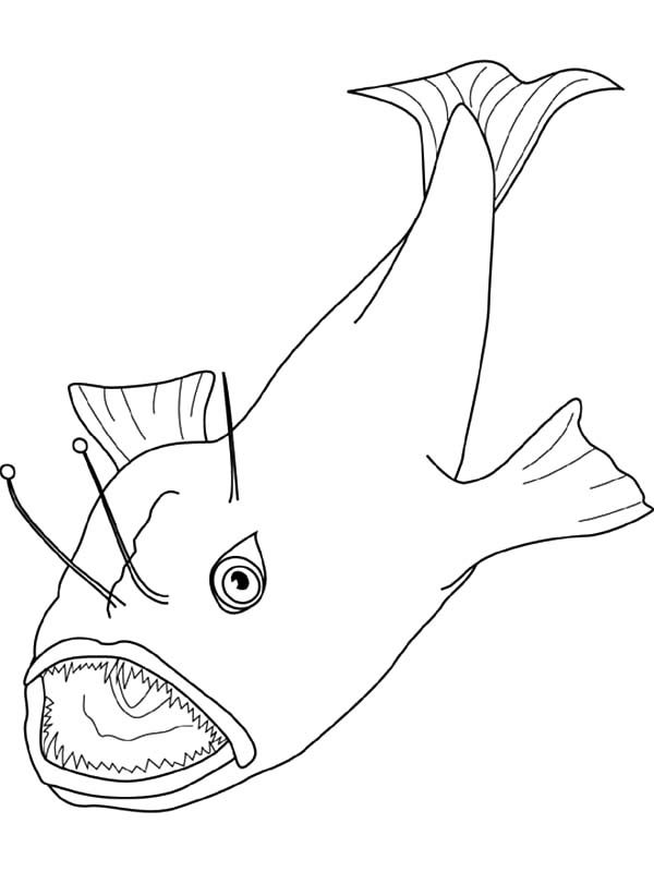 Angler Fish, : Angler Fish Catching Prey Coloring Pages