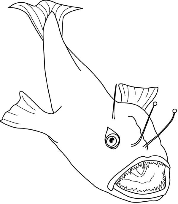 Angler Fish, : Angler Fish Coloring Pages