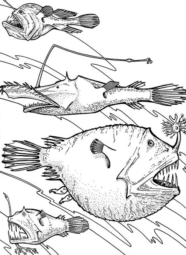 Angler Fish, : Angler Fish is Deep Sea Fish Coloring Pages
