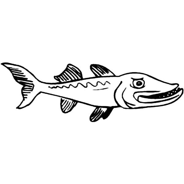Barracuda Fish, : Angry Barracuda Fish Coloring Pages