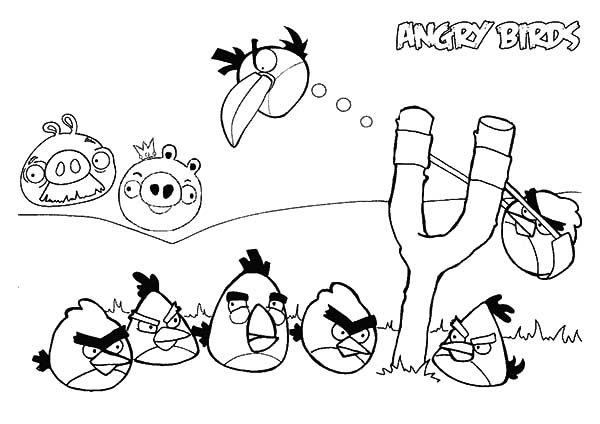 Angry Bird, : Angry Bird War with Pigs Coloring Pages