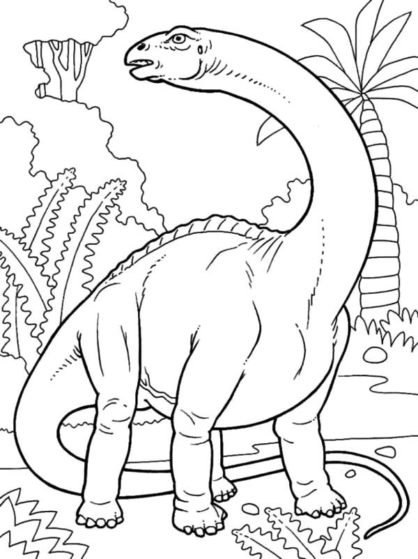 Apatosaurus, : Animal-Dinosaurs-Brontosaurus-Colouring-Sheets-Free-Printable-For