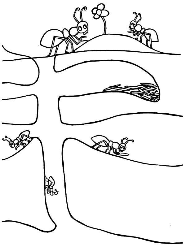 Ants House Coloring Pages Ants House Coloring Pages