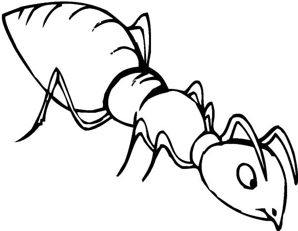 Ants, : Ants is Smelling Food Coloring Pages