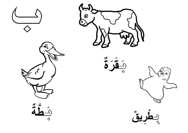 Arabic Alphabet, : Arabic Alphabet Baa for Duck and Ox Coloring Pages
