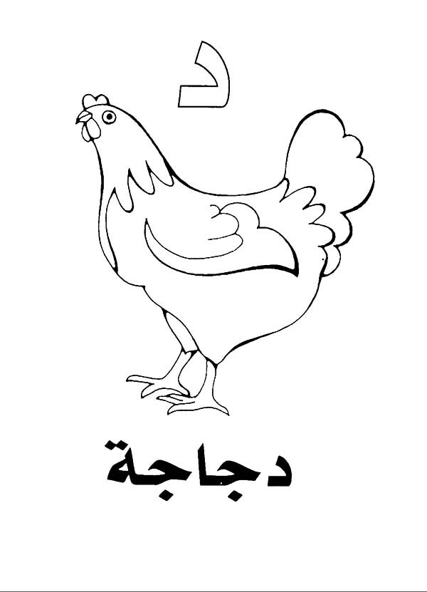 Arabic Alphabet, : Arabic Alphabet Daal for Hen Coloring Pages