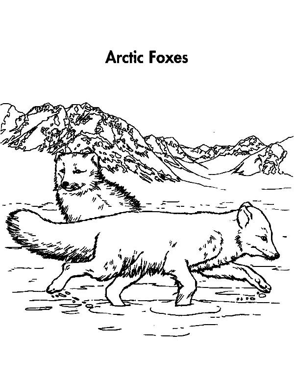 Artic Fox, : Artic Fox Couple Mating Coloring Pages