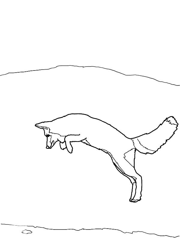 Artic Fox, : Artic Fox Jumping High Coloring Pages