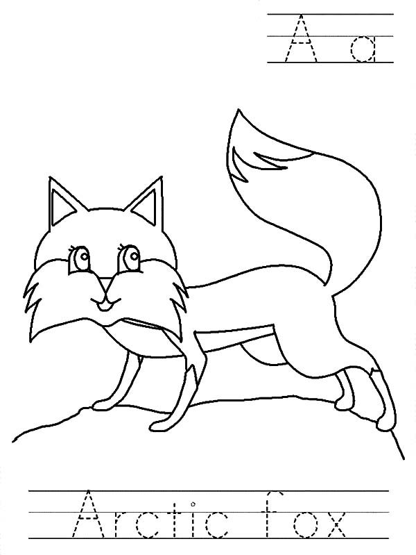 Artic Fox, : Artic Fox Worksheet Coloring Pages