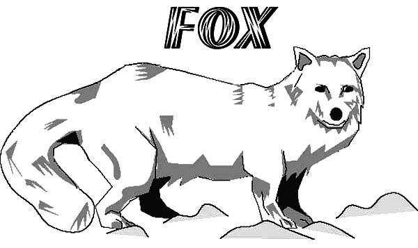 Artic Fox, : Artic Fox on Ice Rock Coloring Pages
