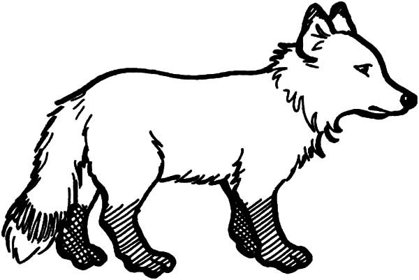 Artic Fox, : Artic Fox with Dirty Feet Coloring Pages