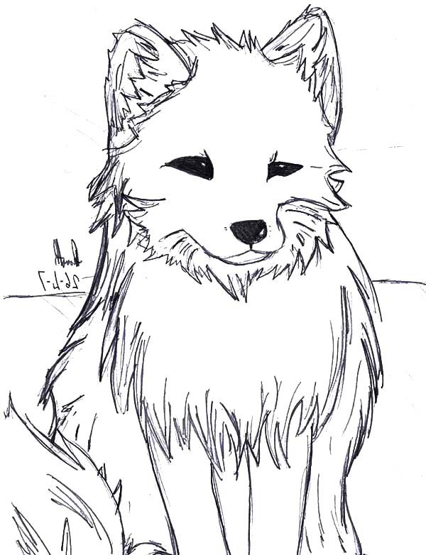 Artic Fox, : Artistic Drawing of Artic Fox Coloring Pages