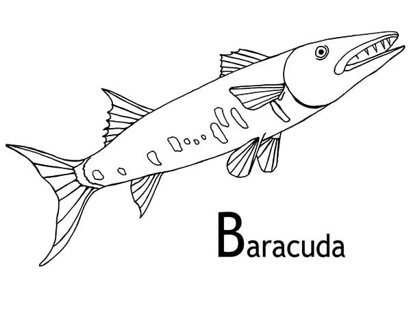 Barracuda Fish, : B is for Barracuda Fish Coloring Pages