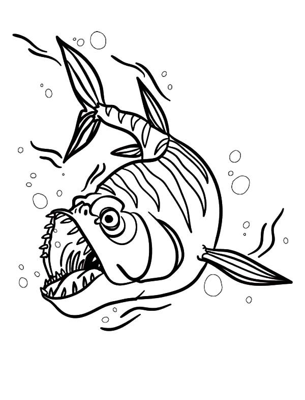 Barracuda Fish, : Barracuda Fish Attack Coloring Pages