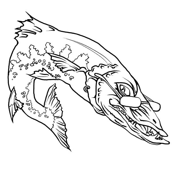 Barracuda Fish, : Barracuda Fish Wearing Glassess Coloring Pages