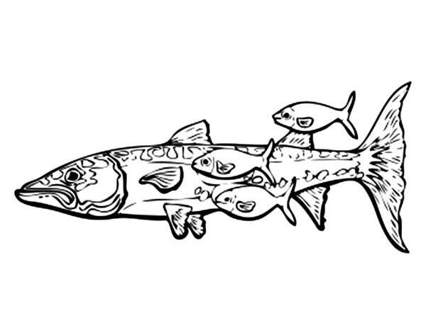 Barracuda Fish And Remora Fishes Coloring Pages