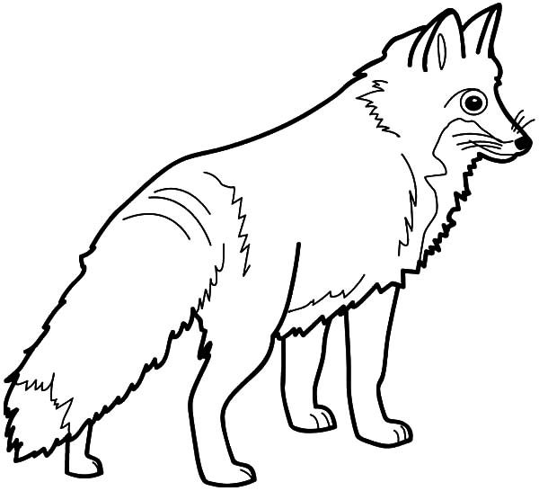 Artic Fox, : Big Eyed Artic Fox Coloring Pages