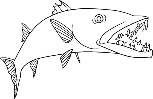 Barracuda Fish, : Dangerous Barracuda Fish Coloring Pages