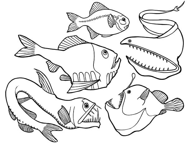 Angler Fish, : Dangerous Deep Sea Fish Angler Fish Coloring Pages