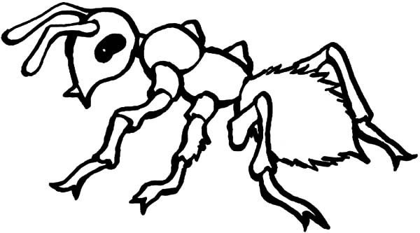 Ants, : Dangerous Fire Ants Coloring Pages