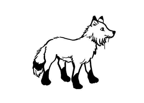 Artic Fox, : Drawing Artic Fox Coloring Pages