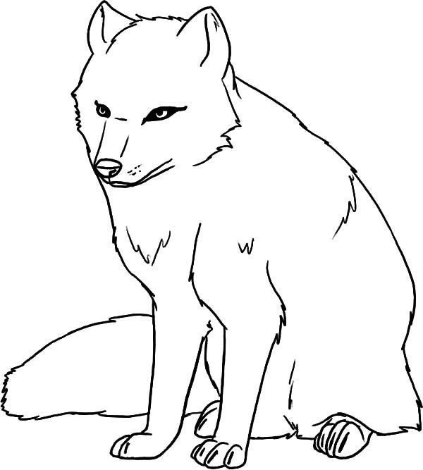 Artic Fox, : Female Artic Fox Coloring Pages