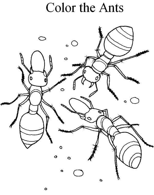 Ants, : Fire Ants Lay Eggs Coloring Pages