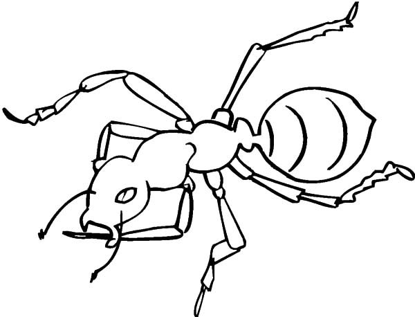 Ants, : Furious Ants Coloring Pages