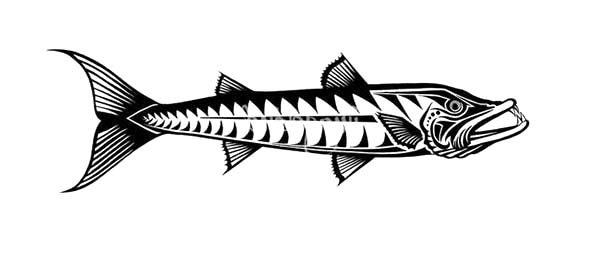 great barracuda fish coloring pages