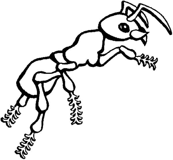 Ants, : Hairy Feet Ants Coloring Pages
