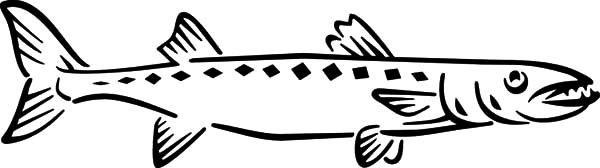Barracuda Fish, : How to Draw Barracuda Fish Coloring Pages