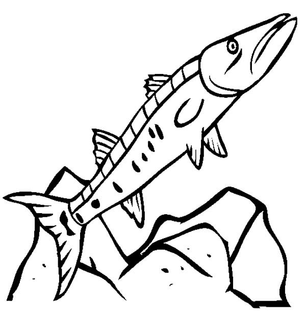 Barracuda Fish, : Hungry Barracuda Fish Coloring Pages