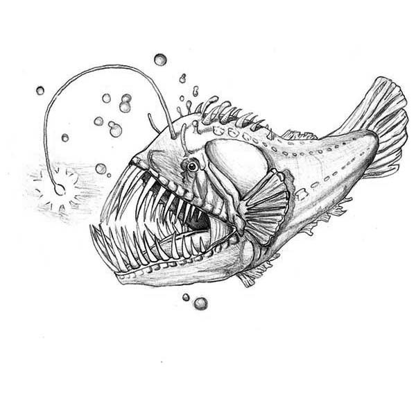 Angler Fish, : Luminescene Angler Fish Coloring Pages