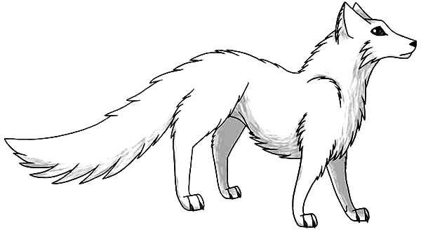 Artic Fox, : Manga Draw of Artic Fox Coloring Pages