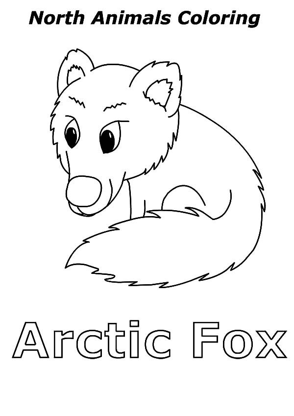Artic Fox, : North Animal Artic Fox Coloring Pages