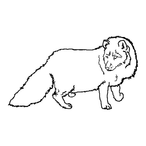 Artic Fox, : Pregnant Artic Fox Coloring Pages