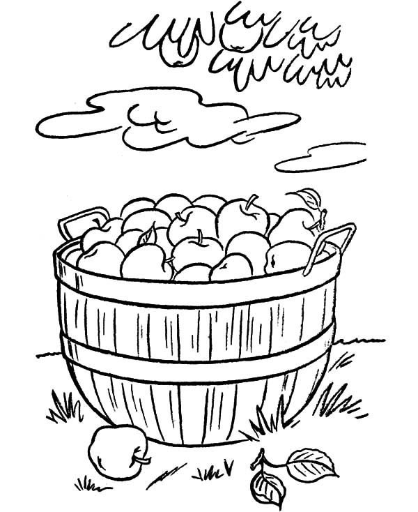 Apple Basket, : Put All Apple in Apple Basket Coloring Pages