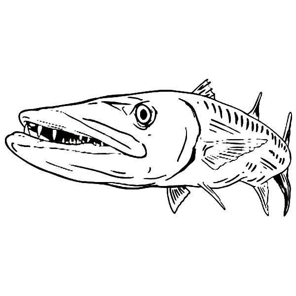 sea predator barracuda fish coloring pages