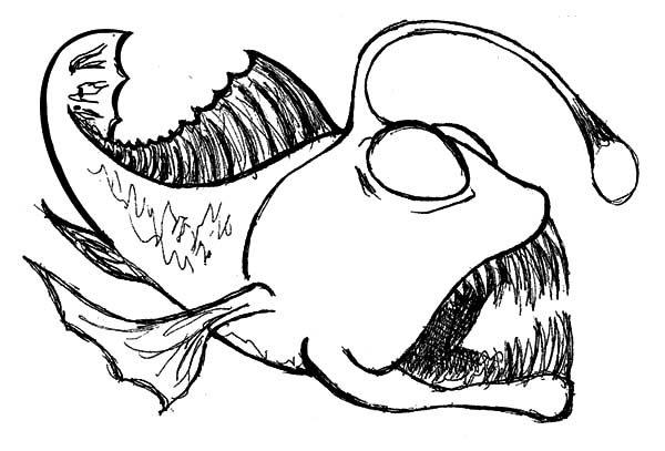 Angler Fish, : Sketch of Angler Fish Coloring Pages