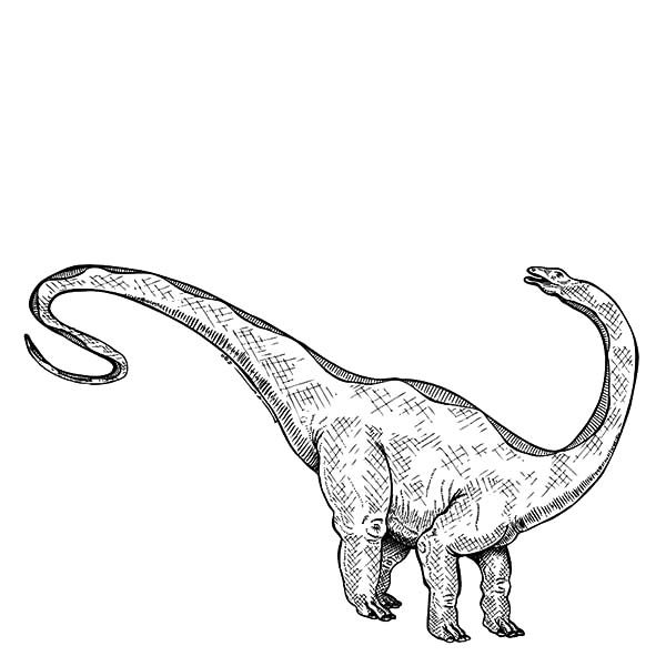 Apatosaurus, : Sketch of Apatosaurus Coloring Pages
