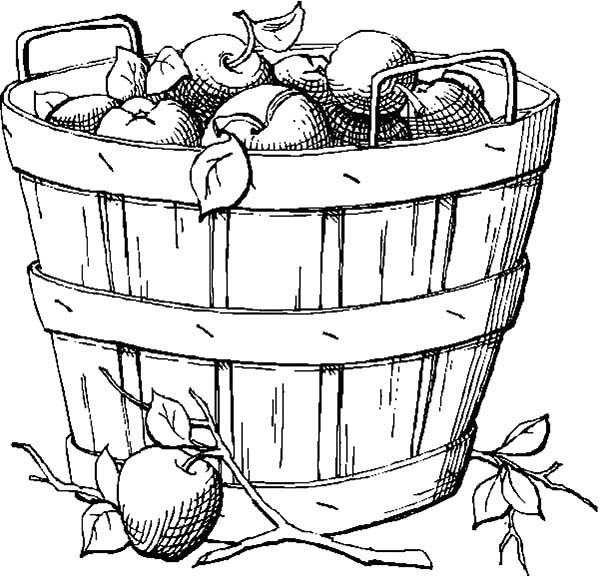 Apple Basket, : Sketch of Apple Basket Coloring Pages
