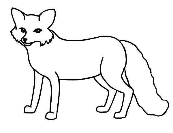 Artic Fox, : Thin Artic Fox Coloring Pages