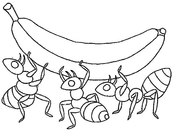 Ants, : Three Ants Lifting a Banana Coloring Pages